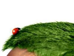 молодо-зелено