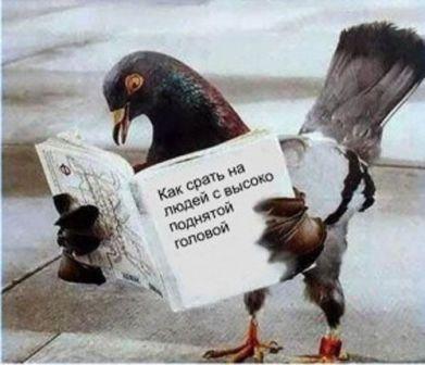 голубь-убийца
