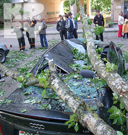 деревопадение